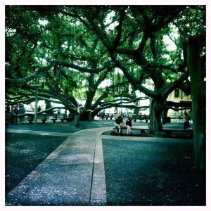 the old banyan