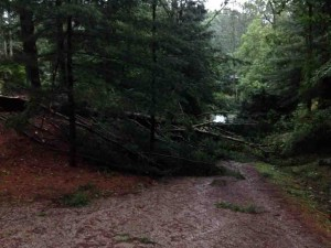 This is half of a 150 foot pine tree... on my driveway!