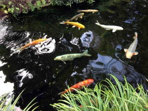 What's not to like about Koi?