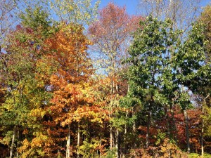 A lovely fall accompanies the music!