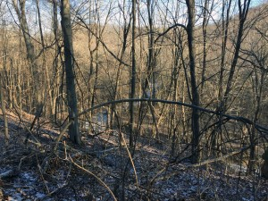 Winter trees and the frozen Shade River