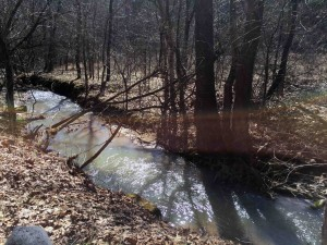 A little creek heading for Stroud's Run