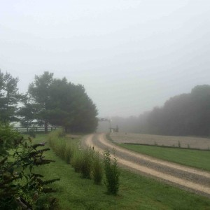 Foggy morning at The Ranch