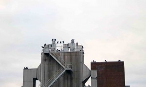 Vultures atop the ol power plant