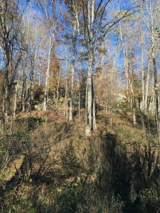 This is whitetail terrain...