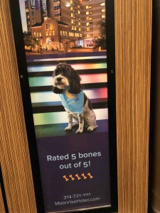 Any hotel that loves dogs is loved by me!